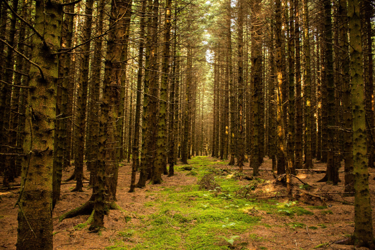Forest bathing at Kielder Forest